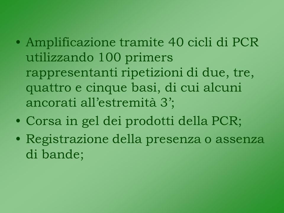 Amplificazione tramite 40 cicli di PCR utilizzando 100 primers rappresentanti ripetizioni di due, tre, quattro e cinque basi, di cui alcuni ancorati allestremità 3; Corsa in gel dei prodotti della PCR; Registrazione della presenza o assenza di bande;