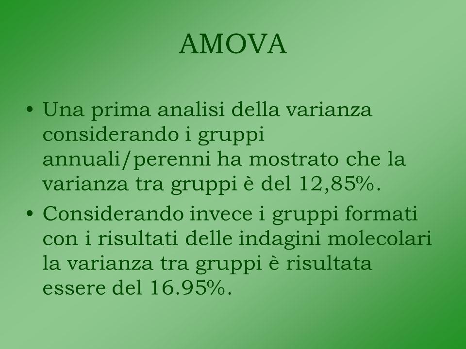 AMOVA Una prima analisi della varianza considerando i gruppi annuali/perenni ha mostrato che la varianza tra gruppi è del 12,85%.