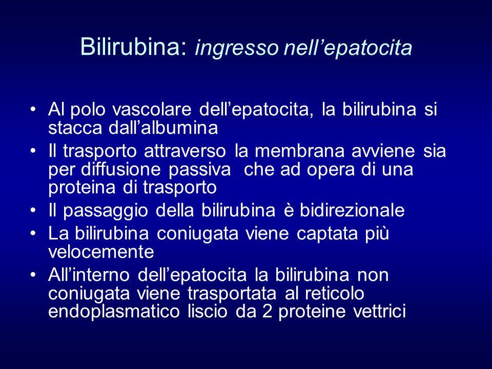 Bilirubina: ingresso nellepatocita Al polo vascolare dellepatocita, la bilirubina si stacca dallalbumina Il trasporto attraverso la membrana avviene s