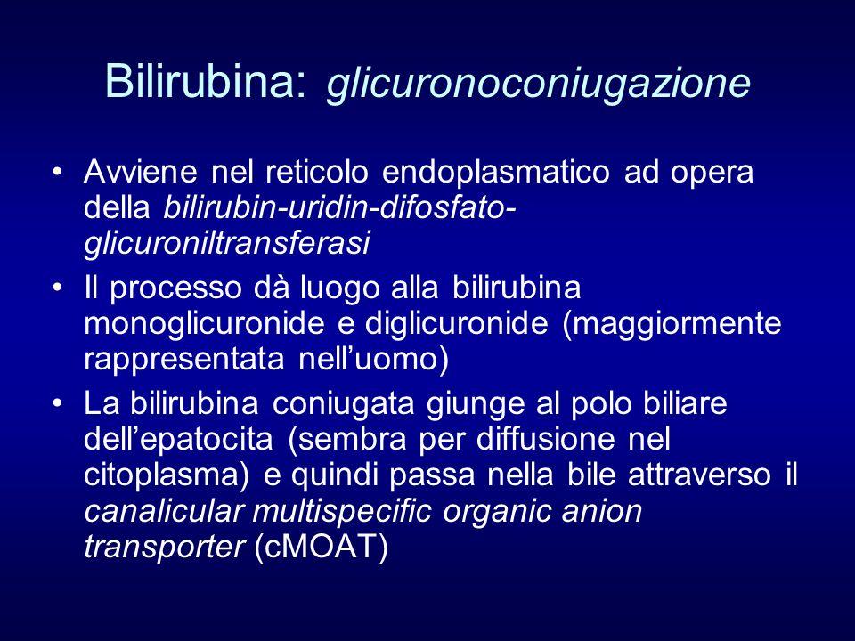 Bilirubina: catabolismo La bilirubina coniugata, escreta nella bile, rimane immodificata durante il transito attraverso le vie biliari, e la maggior parte dellintestino tenue A livello dellileo distale e del colon viene idrolizzata e quindi ridotta ad opera di enzimi della flora batterica sino a formare i bilinogeni I bilinogeni sono in parte eliminati con le feci (stercobilina) ed in parte riassorbiti, captati e riescreti immodificati, dando origine al circolo enteroepatico dei bilinogeni Una parte dei bilinogeni raggiunge il circolo sistemico legata allalbumina e viene eliminata dal rene (urobilina)