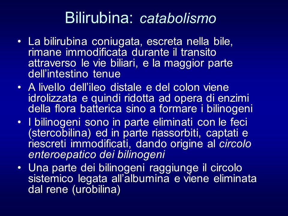 Bilirubina: catabolismo La bilirubina coniugata, escreta nella bile, rimane immodificata durante il transito attraverso le vie biliari, e la maggior p