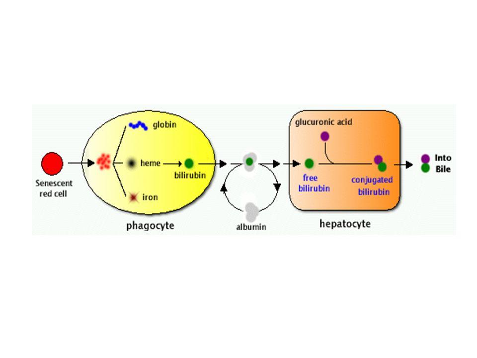 Colestasi intraepatica Da cause parenchimali - epatiti virali - epatite alcolica - epatite da farmaci - epatiti autoimmuni - colestasi della gravidanza Su base genetica Sindromi da vanificazione dei dotti biliari non genetiche - Cirrosi biliare primitiva (CBP) - Colangite sclerosante primitiva (CSP) - Colangite autoimmune (CBP AMA-negativa) - Sindromi da overlap CBP o CSP/epatite autoimmune - Duttopenia idiopatica delladulto Infettive - da colangite batterica - da sepsi generalizzata - da infezioni del fegato e delle vie biliari (virus, miceti, parassiti) Da calcolosi intraepatica Neoplastiche - da sindrome paraneoplastica - da infiltrazione epatica - da compressione dellalbero biliare Post-trapianto di fegato