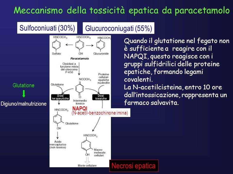 Meccanismo della tossicità epatica da paracetamolo Sulfoconiuati (30%) Glucuroconiugati (55%) Glutatione Digiuno/malnutrizione (N-acetil-benzochinone imina) NAPQI Necrosi epatica Quando il glutatione nel fegato non è sufficiente a reagire con il NAPQI, questo reagisce con i gruppi sulfidrilici delle proteine epatiche, formando legami covalenti.