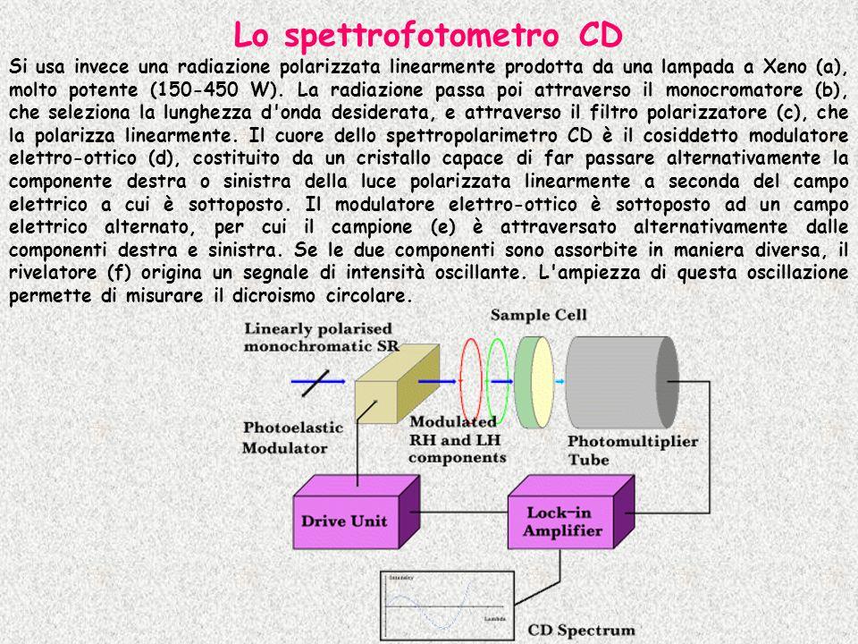 Lo spettrofotometro CD Si usa invece una radiazione polarizzata linearmente prodotta da una lampada a Xeno (a), molto potente (150-450 W). La radiazio
