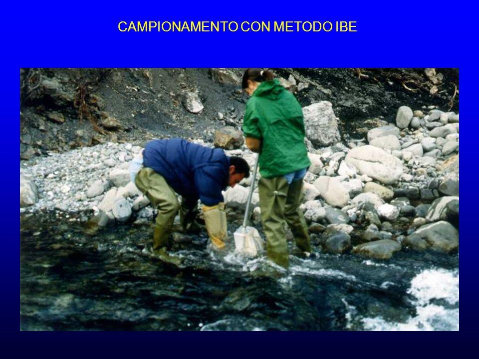 CAMPIONAMENTO CON METODO IBE