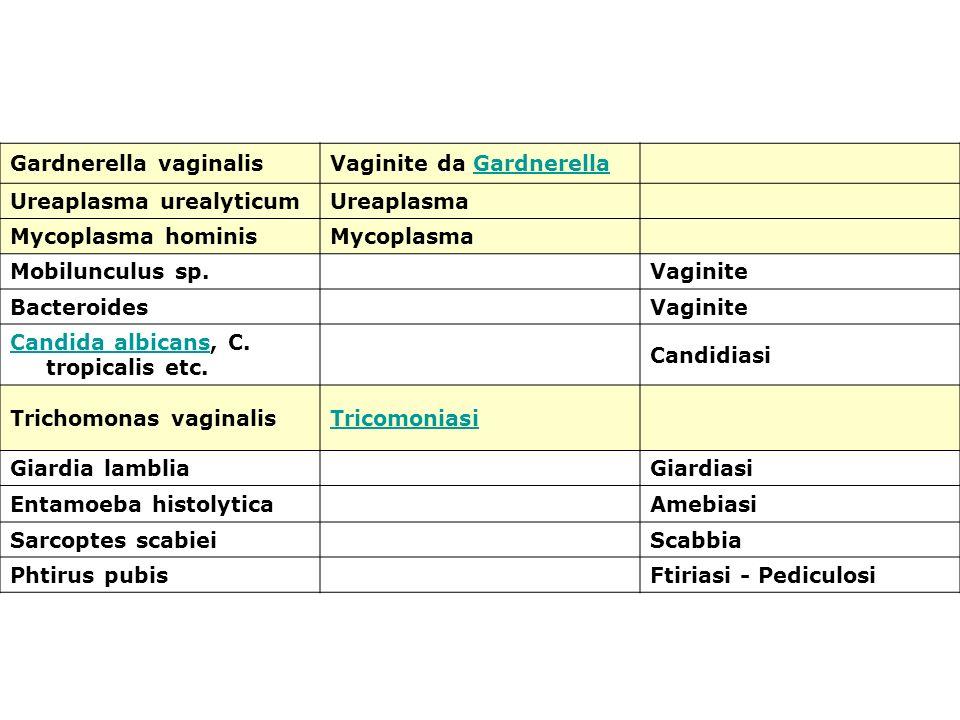 Gardnerella vaginalisVaginite da GardnerellaGardnerella Ureaplasma urealyticumUreaplasma Mycoplasma hominisMycoplasma Mobilunculus sp.Vaginite Bactero