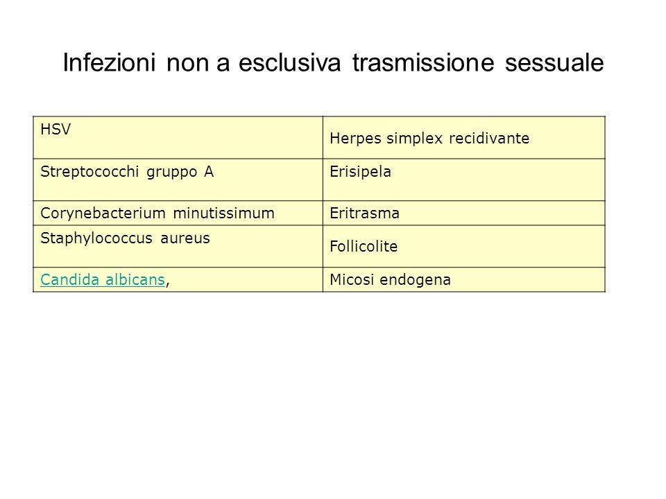 Infezioni non a esclusiva trasmissione sessuale HSV Herpes simplex recidivante Streptococchi gruppo AErisipela Corynebacterium minutissimumEritrasma S