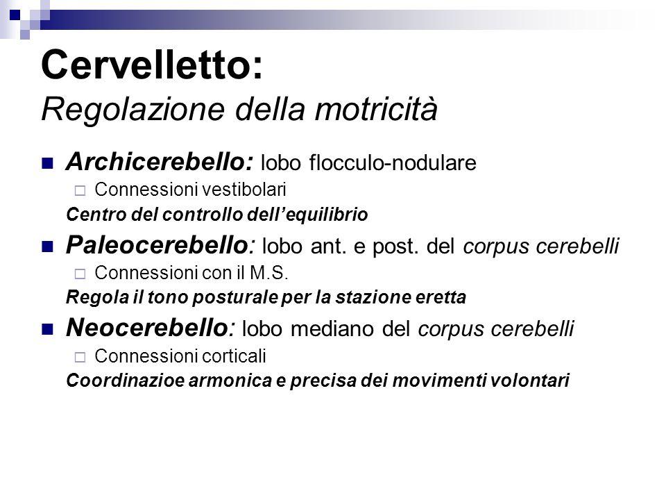 Cervelletto: Regolazione della motricità Archicerebello: lobo flocculo-nodulare Connessioni vestibolari Centro del controllo dellequilibrio Paleocerebello: lobo ant.
