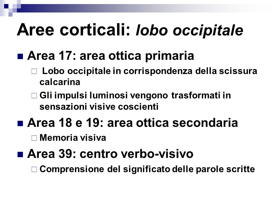 Aree corticali: lobo occipitale Area 17: area ottica primaria Lobo occipitale in corrispondenza della scissura calcarina Gli impulsi luminosi vengono trasformati in sensazioni visive coscienti Area 18 e 19: area ottica secondaria Memoria visiva Area 39: centro verbo-visivo Comprensione del significato delle parole scritte