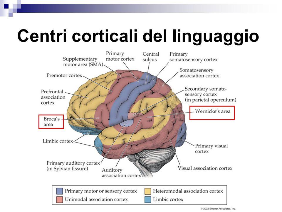 Centri corticali del linguaggio
