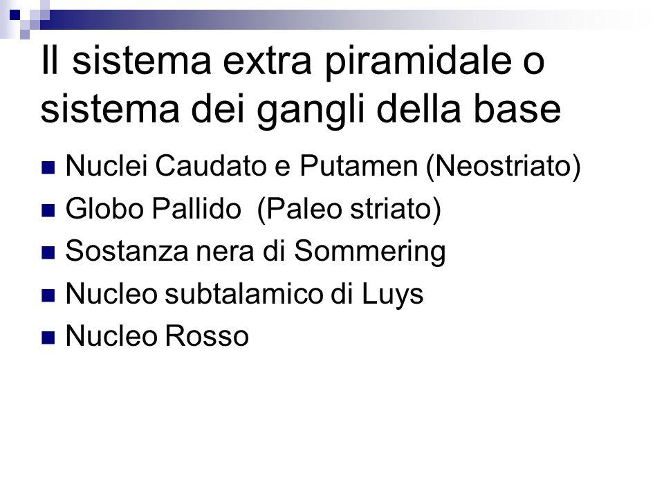 Il sistema extra piramidale o sistema dei gangli della base Nuclei Caudato e Putamen (Neostriato) Globo Pallido (Paleo striato) Sostanza nera di Sommering Nucleo subtalamico di Luys Nucleo Rosso