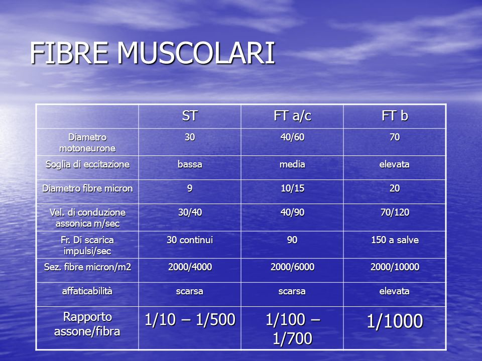 FIBRE MUSCOLARI ST FT a/c FT b Diametro motoneurone 3040/6070 Soglia di eccitazione bassamediaelevata Diametro fibre micron 910/1520 Vel. di conduzion