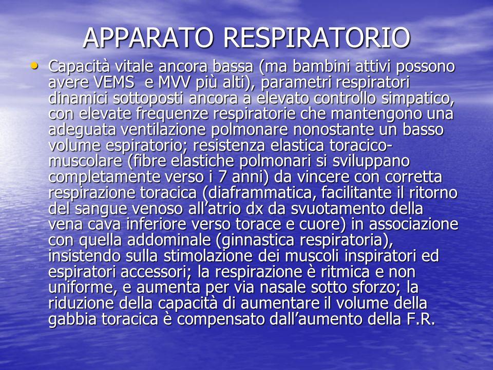 APPARATO RESPIRATORIO Capacità vitale ancora bassa (ma bambini attivi possono avere VEMS e MVV più alti), parametri respiratori dinamici sottoposti an