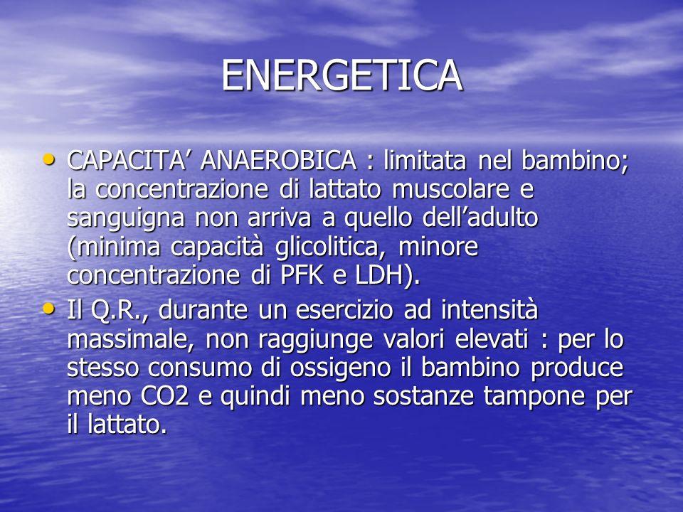 ENERGETICA CAPACITA ANAEROBICA : limitata nel bambino; la concentrazione di lattato muscolare e sanguigna non arriva a quello delladulto (minima capac