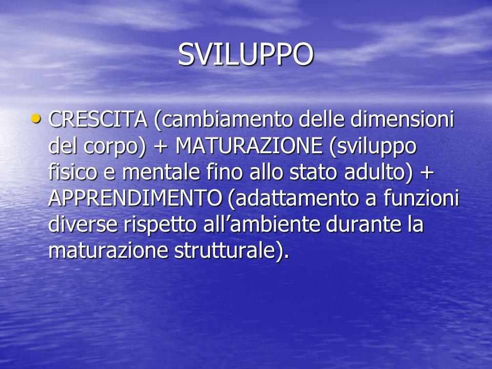 SVILUPPO PROCESSO GLOBALE DI CRESCITA, CON INTERAZIONE DELLE SFERE BIOLOGICA – PSICOLOGICA – SOCIALE.