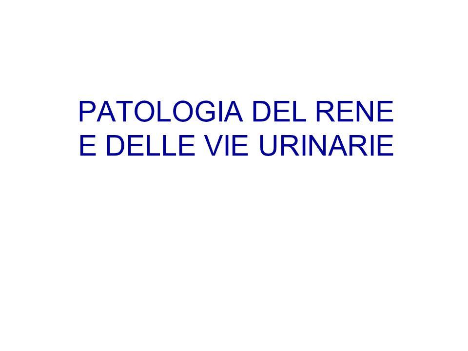 PATOLOGIA DEL RENE E DELLE VIE URINARIE