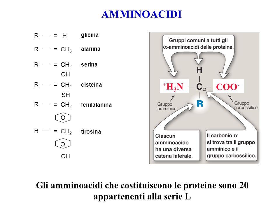 AMMINOACIDI = H = CH 3 = CH 2 OH SH = CH 2 O O OH glicina R R R R R R alanina serina cisteina fenilalanina tirosina Gli amminoacidi che costituiscono
