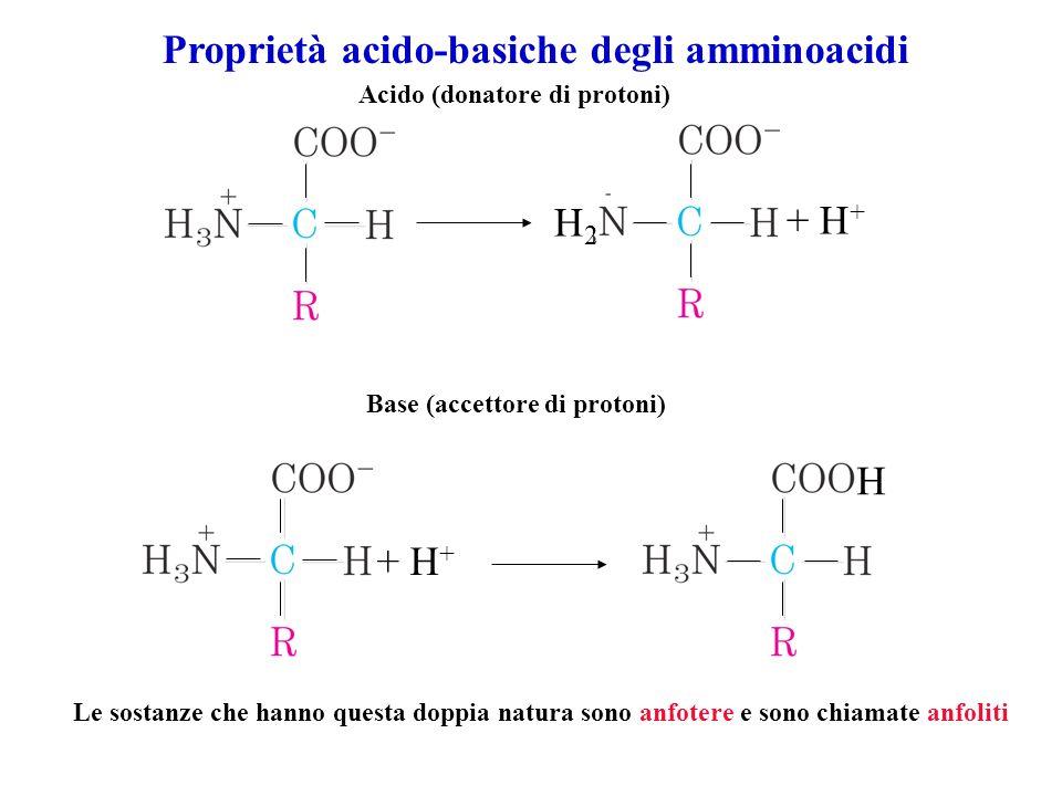 H2H2 + H + Acido (donatore di protoni) Base (accettore di protoni) + H + H Le sostanze che hanno questa doppia natura sono anfotere e sono chiamate an