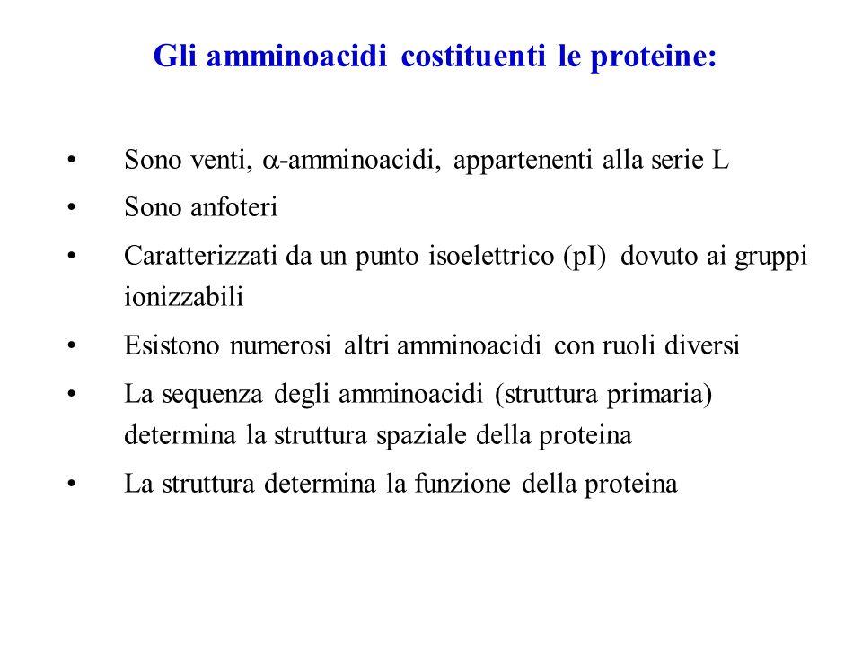 Gli amminoacidi costituenti le proteine: Sono venti, -amminoacidi, appartenenti alla serie L Sono anfoteri Caratterizzati da un punto isoelettrico (pI