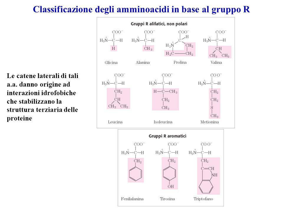 Classificazione degli amminoacidi in base al gruppo R Le catene laterali di tali a.a. danno origine ad interazioni idrofobiche che stabilizzano la str
