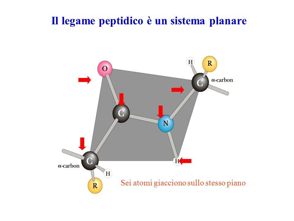 Il legame peptidico è un sistema planare Sei atomi giacciono sullo stesso piano