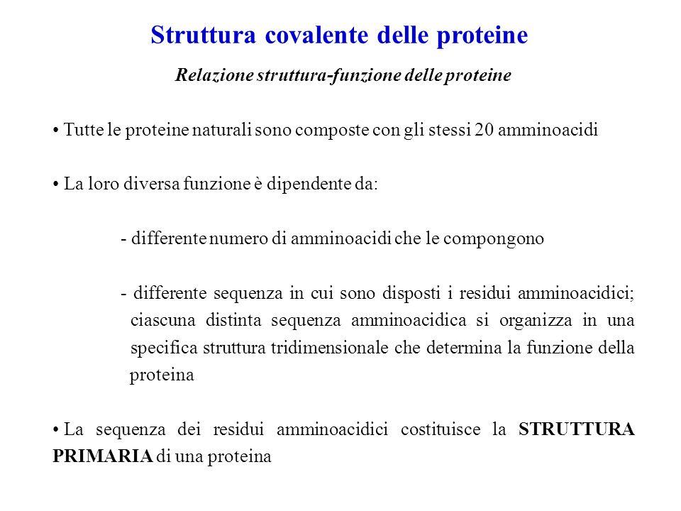 Struttura covalente delle proteine Relazione struttura-funzione delle proteine Tutte le proteine naturali sono composte con gli stessi 20 amminoacidi