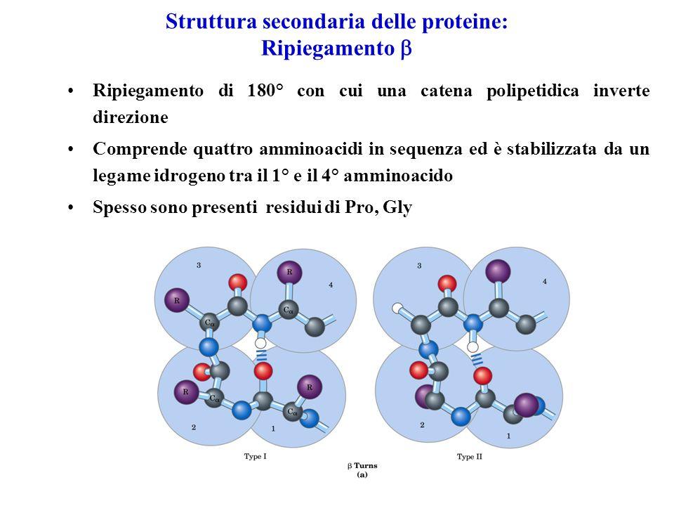 Struttura secondaria delle proteine: Ripiegamento Ripiegamento di 180° con cui una catena polipetidica inverte direzione Comprende quattro amminoacidi