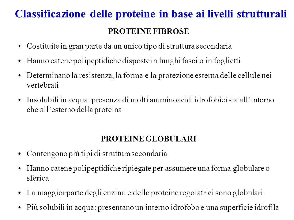 Classificazione delle proteine in base ai livelli strutturali PROTEINE FIBROSE Costituite in gran parte da un unico tipo di struttura secondaria Hanno