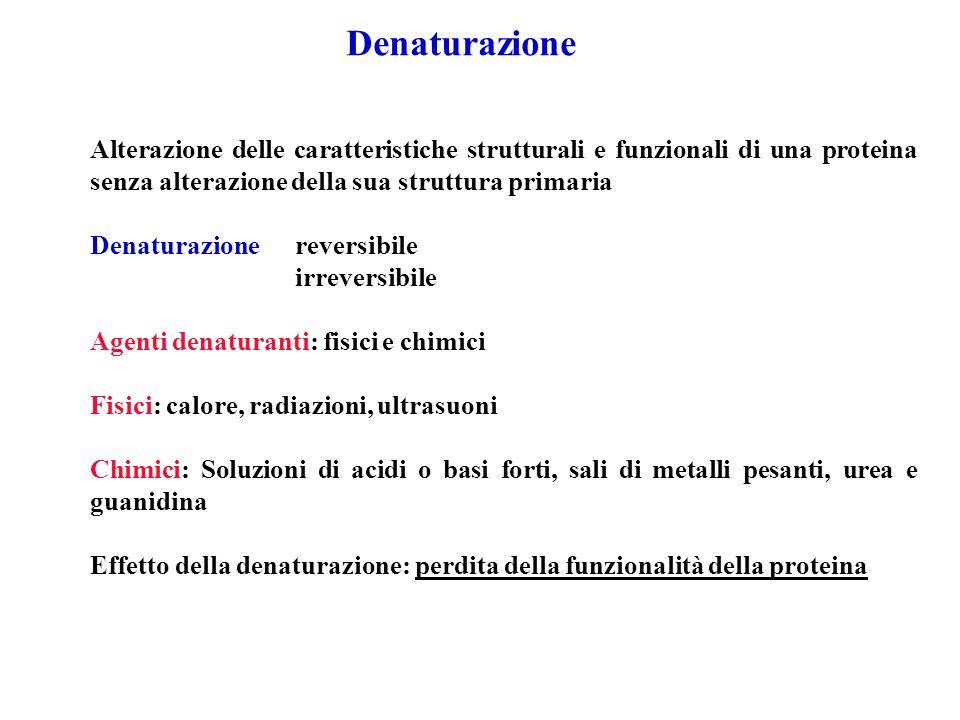 Alterazione delle caratteristiche strutturali e funzionali di una proteina senza alterazione della sua struttura primaria Denaturazione reversibile ir