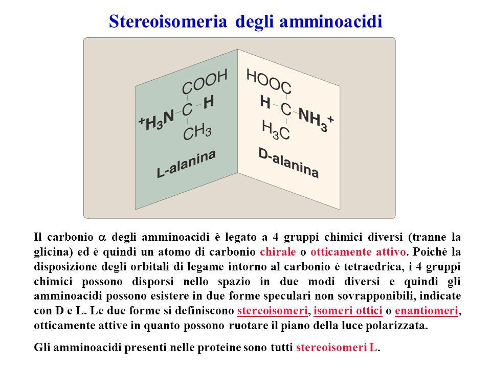Stereoisomeria degli amminoacidi Il carbonio degli amminoacidi è legato a 4 gruppi chimici diversi (tranne la glicina) ed è quindi un atomo di carboni