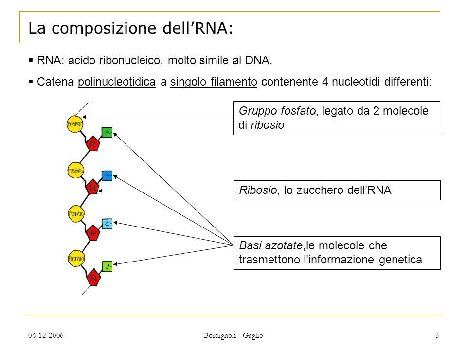 06-12-2006 Bordignon - Gaglio 3 La composizione dellRNA: RNA: acido ribonucleico, molto simile al DNA.