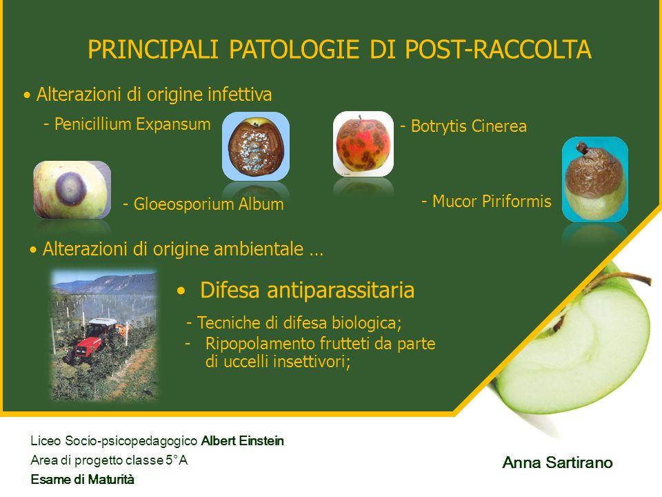 PRINCIPALI PATOLOGIE DI POST-RACCOLTA Alterazioni di origine infettiva - Penicillium Expansum - Botrytis Cinerea - Gloeosporium Album - Mucor Piriform