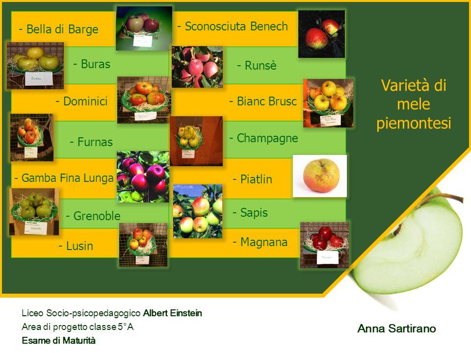 Varietà di mele piemontesi - Dominici - Magnana - Runsè - Bianc Brusc - Champagne - Piatlin - Sapis - Sconosciuta Benech - Buras - Bella di Barge - Fu