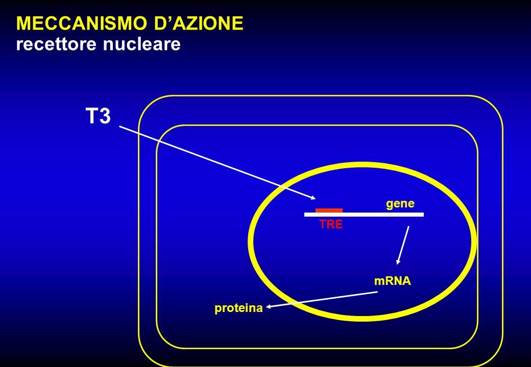 gene MECCANISMO DAZIONE recettore nucleare T3 TRE mRNA proteina