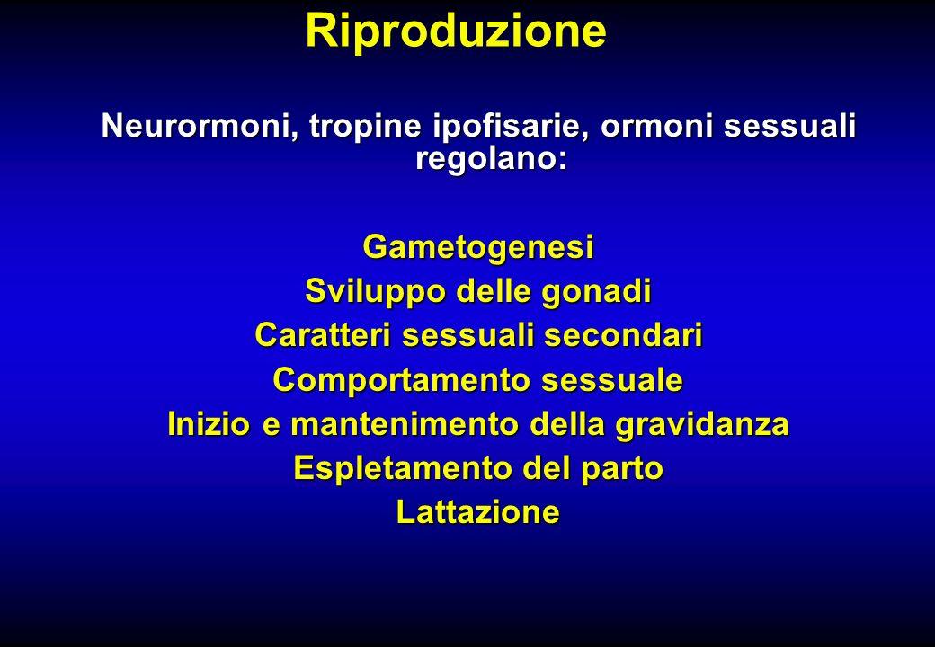 Riproduzione Neurormoni, tropine ipofisarie, ormoni sessuali regolano: Gametogenesi Sviluppo delle gonadi Caratteri sessuali secondari Comportamento s