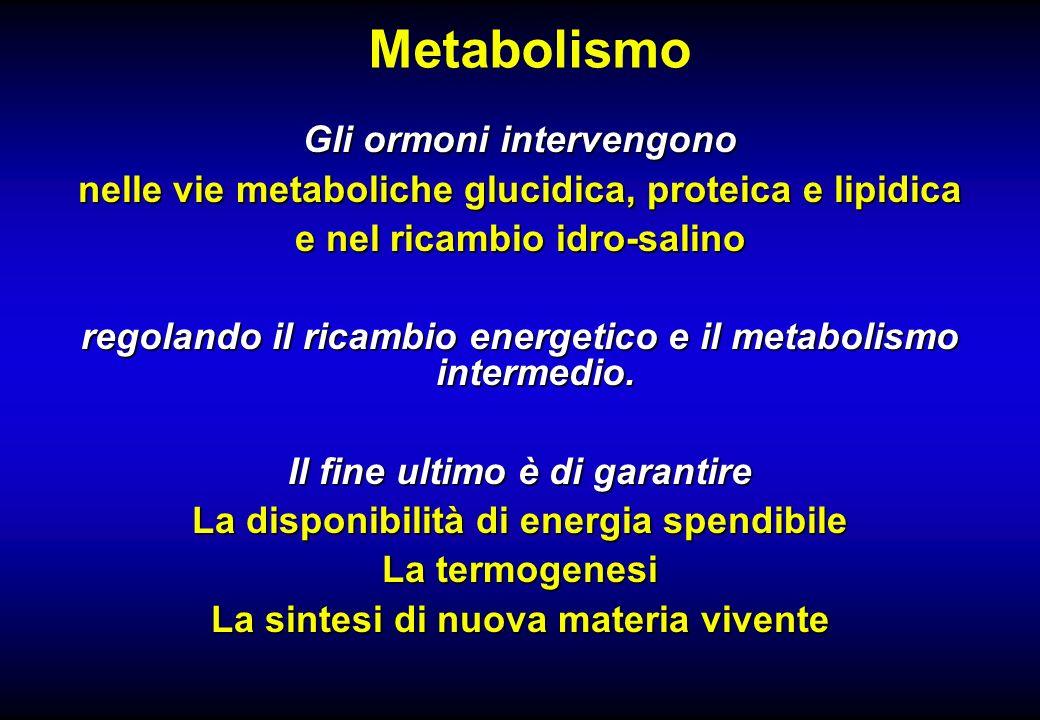Metabolismo Gli ormoni intervengono nelle vie metaboliche glucidica, proteica e lipidica e nel ricambio idro-salino regolando il ricambio energetico e