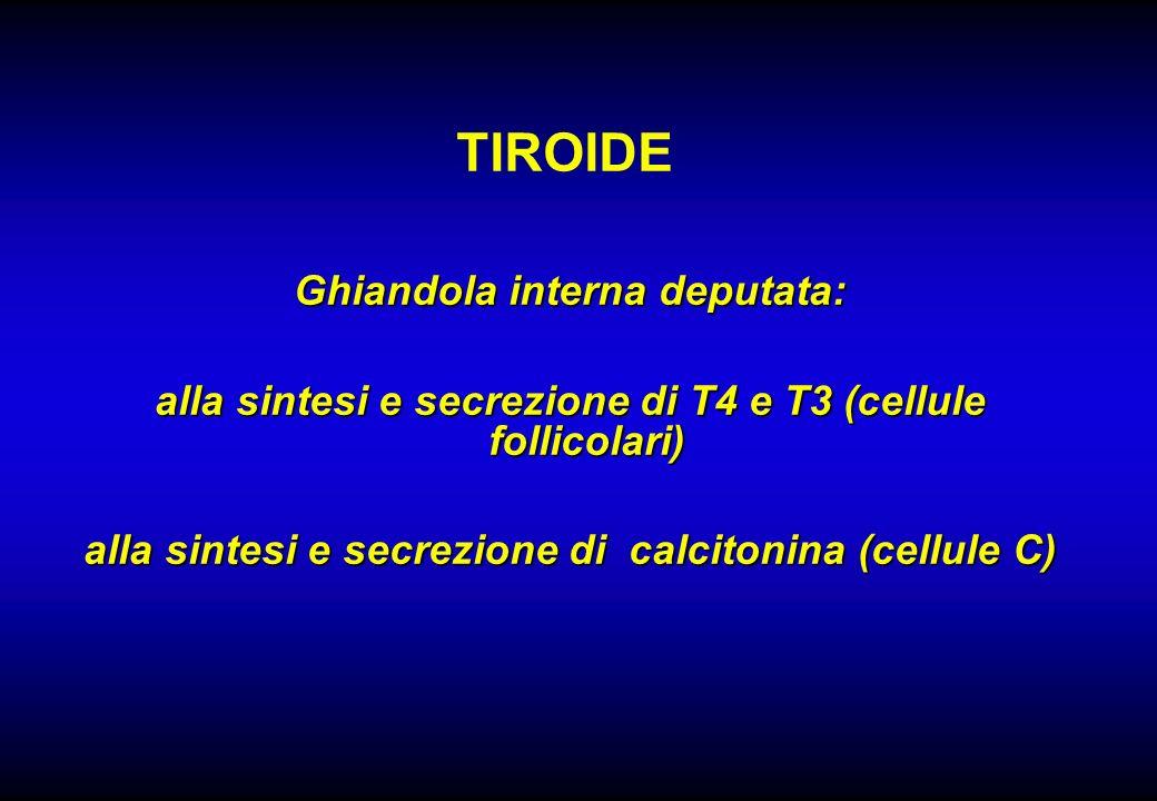 TIROIDE Ghiandola interna deputata: alla sintesi e secrezione di T4 e T3 (cellule follicolari) alla sintesi e secrezione di calcitonina (cellule C)