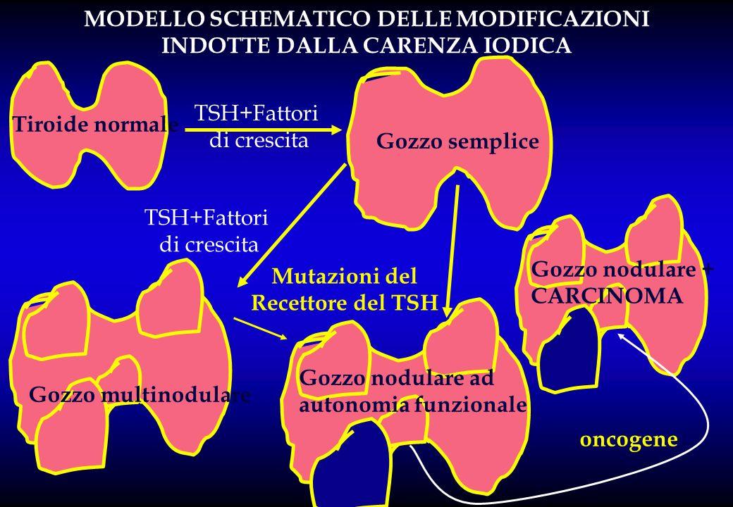 Tiroide normale Gozzo semplice TSH+Fattori di crescita TSH+Fattori di crescita Mutazioni del Recettore del TSH Gozzo nodulare ad autonomia funzionale