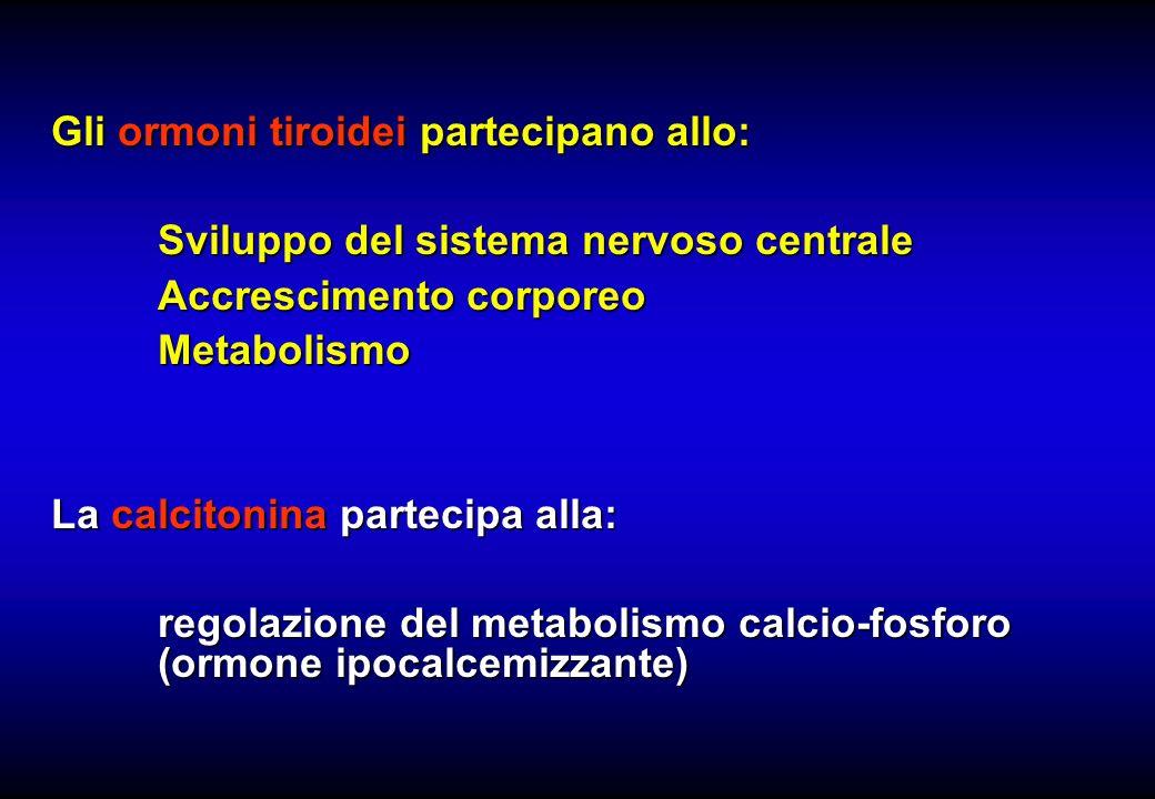 Gli ormoni tiroidei partecipano allo: Sviluppo del sistema nervoso centrale Accrescimento corporeo Metabolismo La calcitonina partecipa alla: regolazi