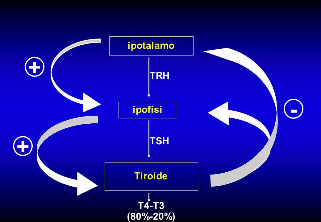 ipotalamo ipofisi Tiroide TRH TSH T4-T3 (80%-20%) - + +