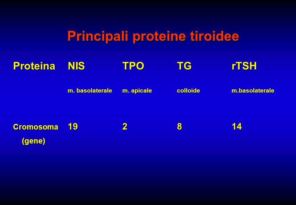 Principali proteine tiroidee ProteinaNISTPOTGrTSH m. basolateralem. apicalecolloidem.basolaterale Cromosoma 192814 (gene) (gene)