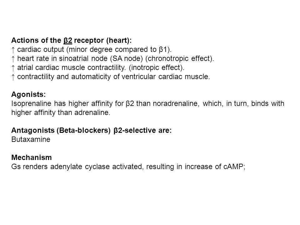 Lenzima adenilico ciclasi catalizza la sintesi di AMP ciclico (cAMP) a partire da ATP.