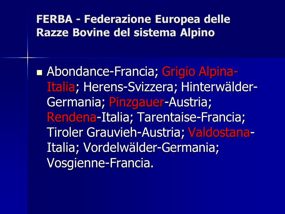 PROGRAMMA DI SELEZIONE La Grigio Alpina viene migliorata in purezza.