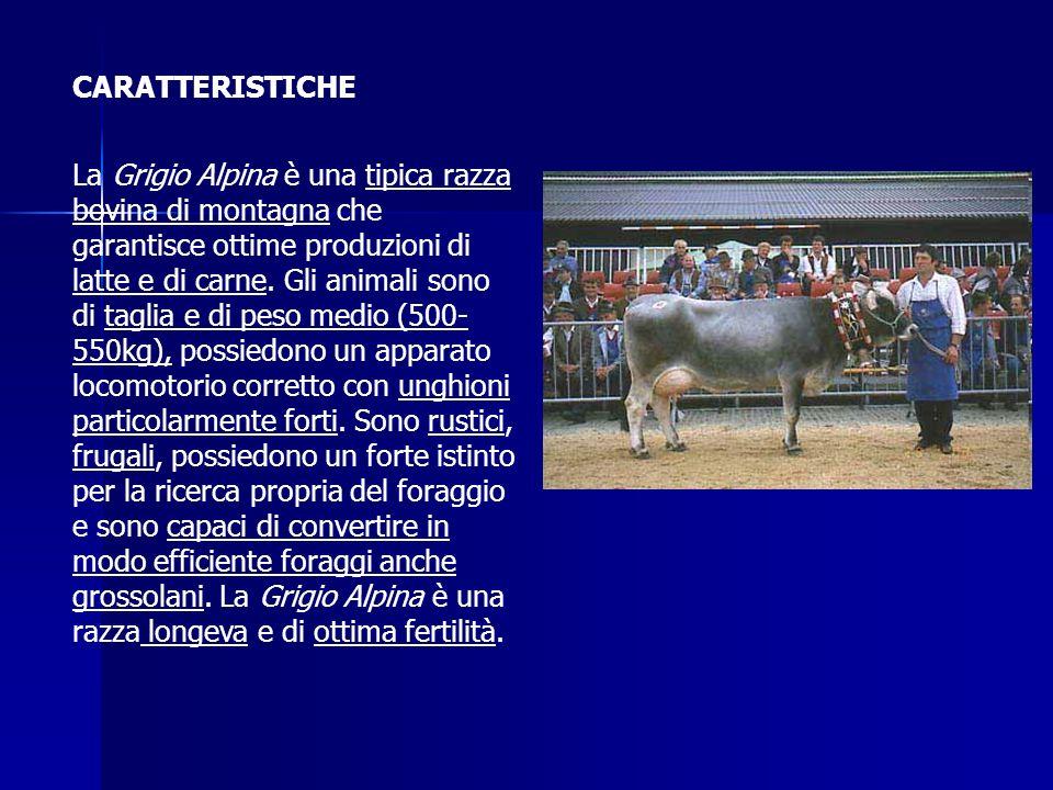 LATTE La qualità del latte prodotto dalla razza Grigio Alpina lo rende adatto sia alla trasformazione in formaggi sia alla produzione di latte per il consumo diretto.