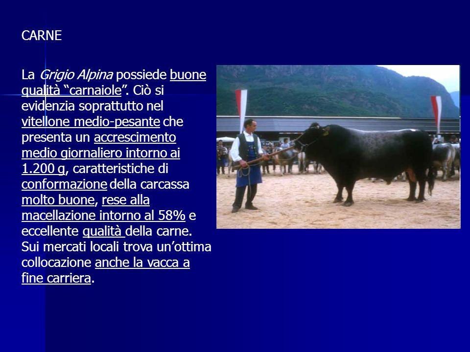 OBIETTIVI DI SELEZIONE Gli obiettivi di selezione per la razza Grigio Alpina consistono nel miglioramento dellattitudine alla produzione di latte e di carne sia in qualità che in qualità.