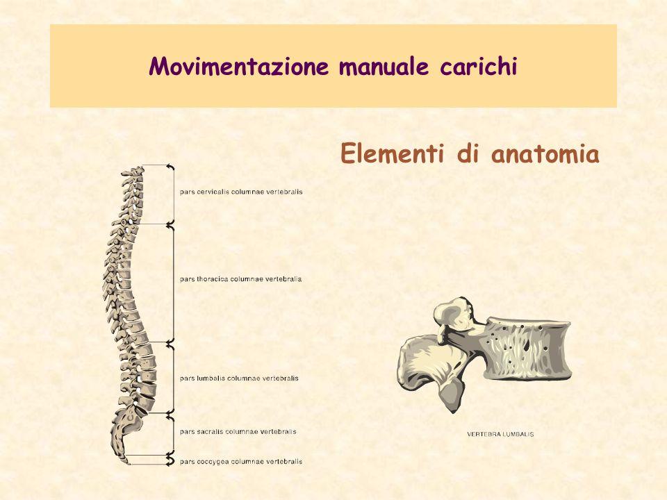Movimentazione manuale carichi La colonna vertebrale (rachide) è costituita da ossa (vertebre), dischi intervertebrali, muscoli e legamenti