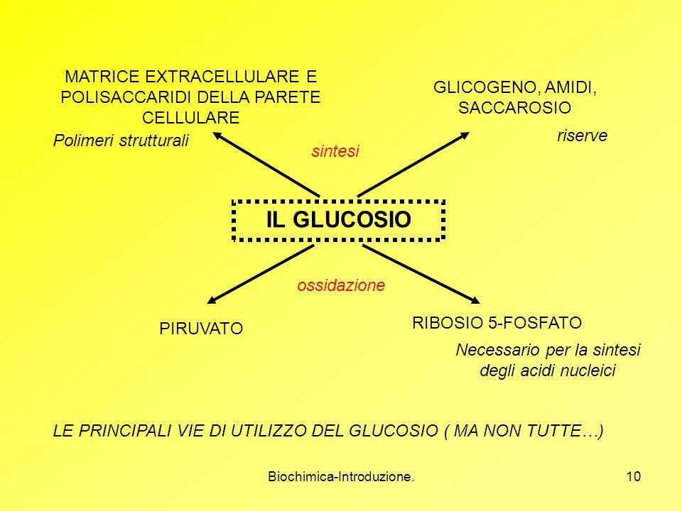 Biochimica-Introduzione.10 IL GLUCOSIO MATRICE EXTRACELLULARE E POLISACCARIDI DELLA PARETE CELLULARE GLICOGENO, AMIDI, SACCAROSIO PIRUVATO RIBOSIO 5-F