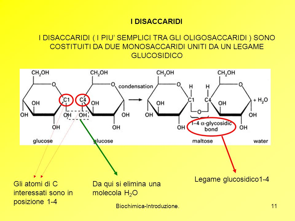 Biochimica-Introduzione.11 I DISACCARIDI I DISACCARIDI ( I PIU SEMPLICI TRA GLI OLIGOSACCARIDI ) SONO COSTITUITI DA DUE MONOSACCARIDI UNITI DA UN LEGA