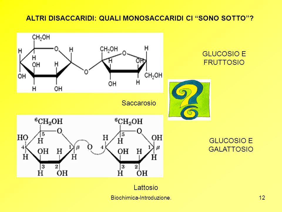 Biochimica-Introduzione.12 ALTRI DISACCARIDI: QUALI MONOSACCARIDI CI SONO SOTTO? Saccarosio Lattosio GLUCOSIO E FRUTTOSIO GLUCOSIO E GALATTOSIO