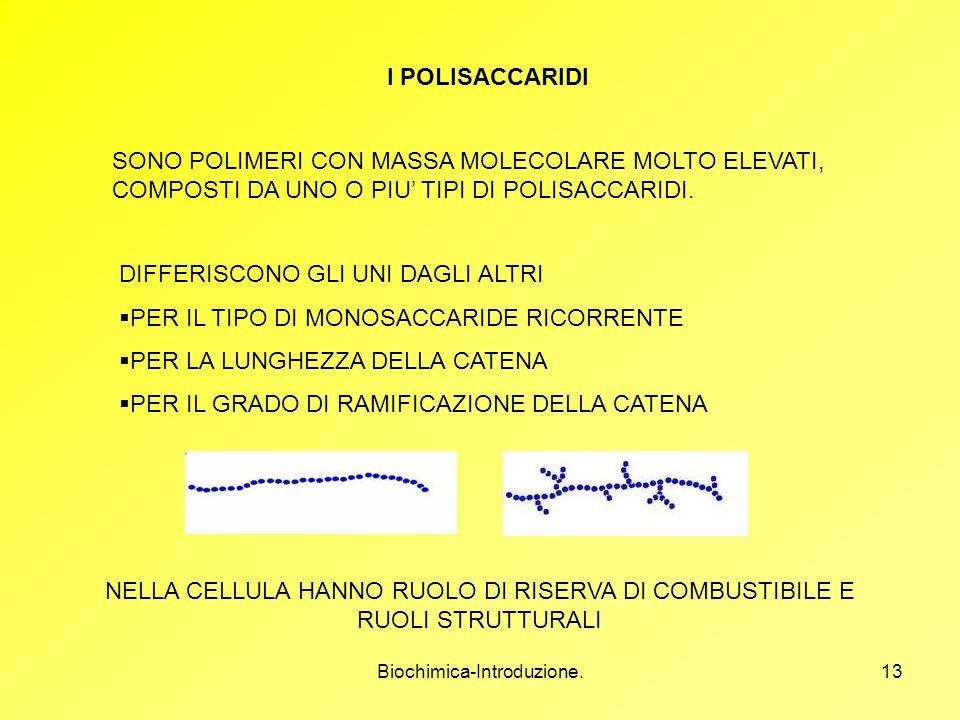 Biochimica-Introduzione.13 I POLISACCARIDI SONO POLIMERI CON MASSA MOLECOLARE MOLTO ELEVATI, COMPOSTI DA UNO O PIU TIPI DI POLISACCARIDI. DIFFERISCONO